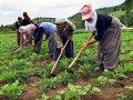 tarımda çalışan kadınlar sadaka değil güvence istiyorlar