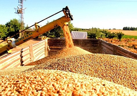 ithal buğday zararına satılacak